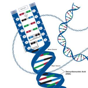 dna_deoxyribonucleic_acid_lg_adv