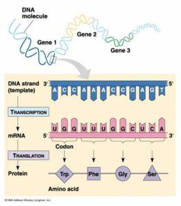 rna-transcription